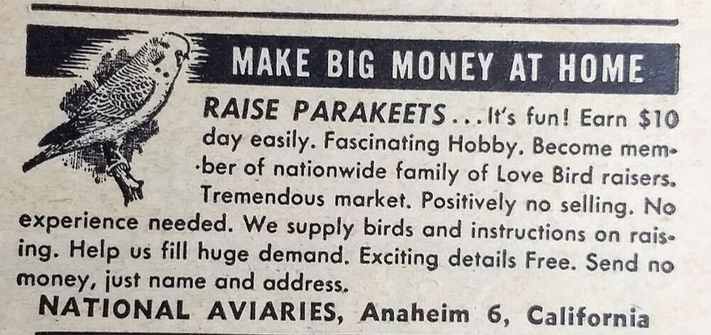 Vintage ad for raising parakeets National Aviaries